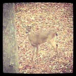 Monday Morning Visitor