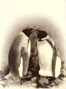 wpid-antarctica8.png